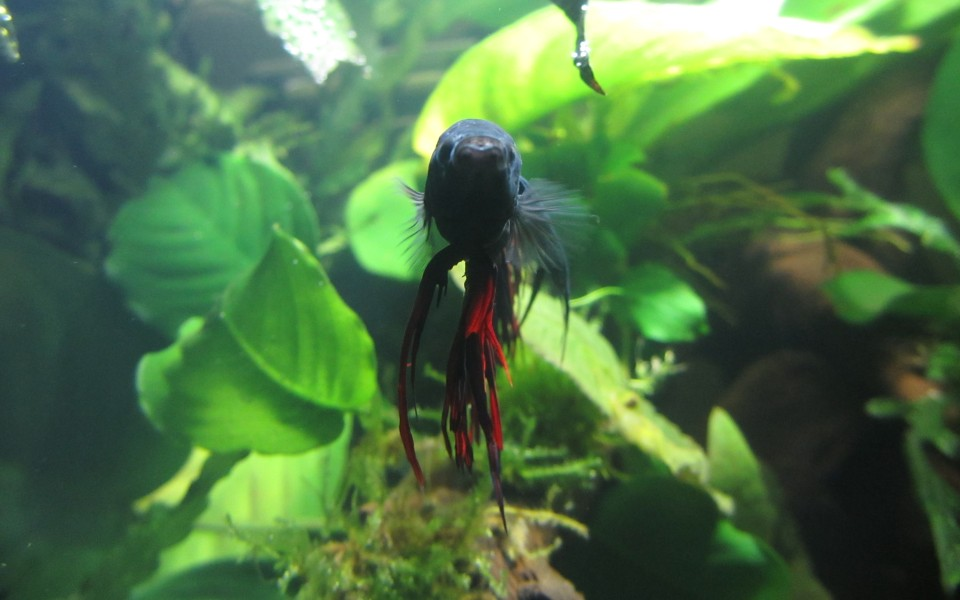 2014-05-17_Aquascaping_Napalm_Fish_017