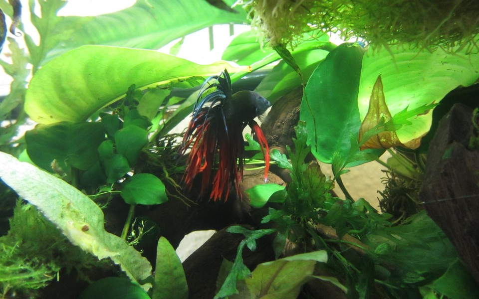 2014-05-18_Aquascaping_Napalm_Fish_030