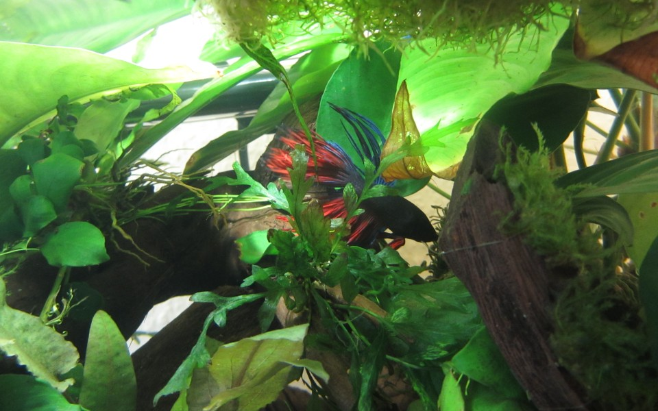 2014-05-18_Aquascaping_Napalm_Fish_032