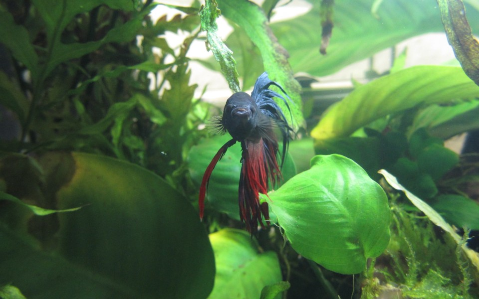2014-05-18_Aquascaping_Napalm_Fish_043
