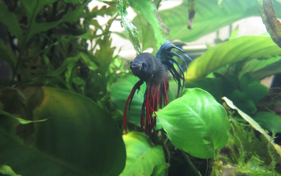 2014-05-18_Aquascaping_Napalm_Fish_044